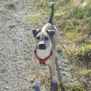 doggy-meal-testimonials-briseide
